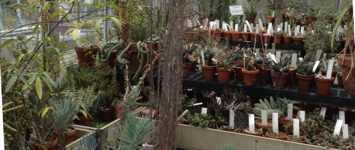 African Succulent Collections