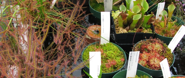 Go to Carnivorous Plant Collection