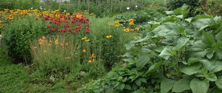 EEB Collections Garden (seasonal)
