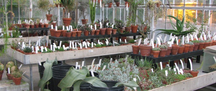 Desert Collections Greenhouse