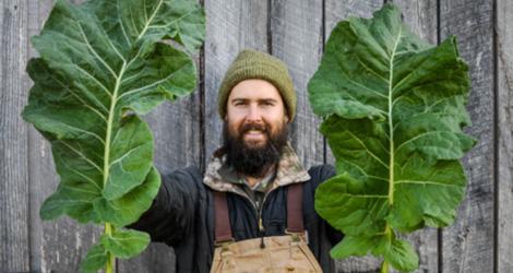 <i>Random Accession: </i>Brassica oleracea